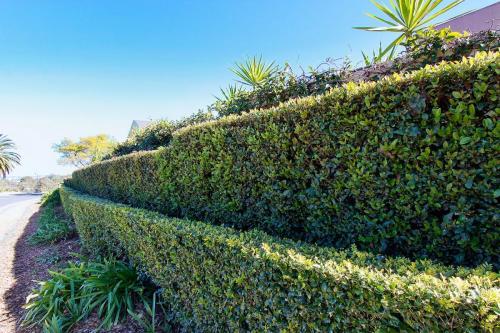 Hedge Maintenance