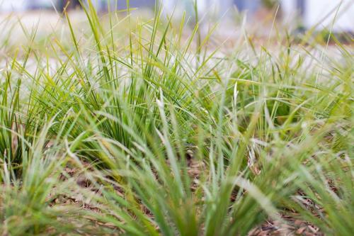 Planting new grasses, plants, & trees